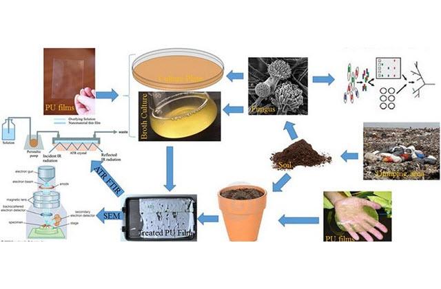 Tin tức Trung Quốc phát hiện loại nấm có khả năng